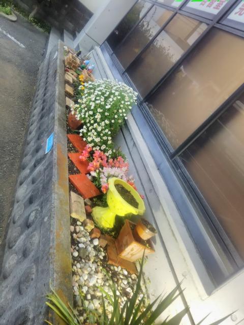 花壇も春らしく!